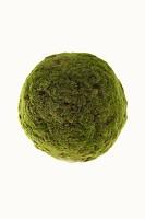 Moss Ball 50cm