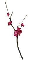 Peach Blossom Pick 55cm