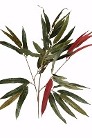 Red Weeping Ficus  Spray