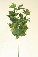 Maple Ivy Spray