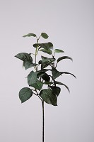 Lemon Leaf Spray 60cm