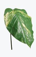 Pothos Leaf  114cm