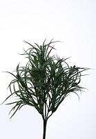 Lavender Leaf Bush (s)
