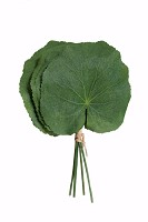 Galax Lotus Leaf 20cm (6pcs per Bundle)