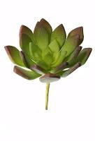 Succulent Pick 17.5cm