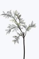 Single Boston Fern Branch 74cm