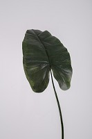 Giant Emerald Philo Single Leaf 98cm
