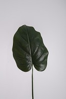Giant Philo Single Leaf 84cm