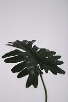 Giant Split Philo Single Leaf 82cm