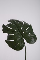 Giant Split Philo Single Leaf 89cm
