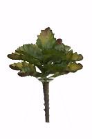 Succulent 17cm