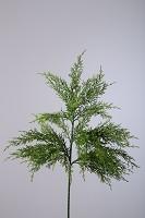 Cypress Bush 50cm