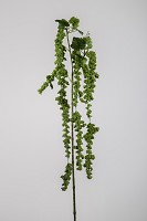 Hanging Amaranthus 98cm