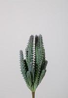 Cactus 18cm