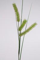 Carex Long Spiculate Spray 132cm