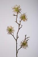 Chestnut Branch 100cm