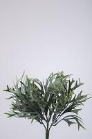 Staghorn Bush x7 28cm