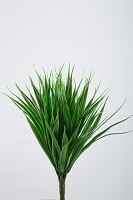 Vanilla Grass Bush x9