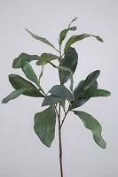 Acacia Leaf Spray 97cm