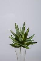 Succulent 16cm