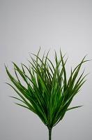Bush x8 Green Dracaena Marjinata 48cm