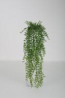 Beans Leaf Vine 88 cm