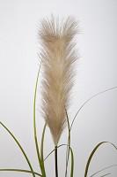 Single Reed Stem 122 cm