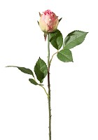Rose Bud Single Stem w/2 Set Lvs