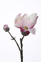 Magnolia Pick 22cm