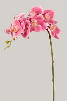Phalaenopsis Orchid Spray w/8 flrs 78cm