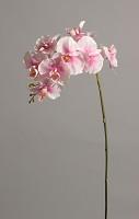 Phalaenopsis Spray 105cm