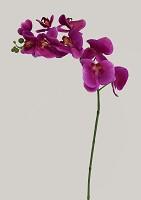 Phalaenopsis Spray 85cm