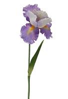 Iris Spray 69cm