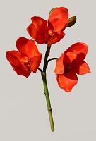 Cymbidium Orchid Pick 30cm