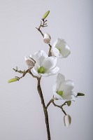 Magnolia Spray 59cm