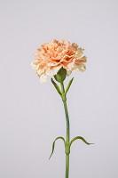 Carnation 53cm