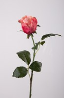 Hybrid Rose Stem w/2 set lvs 55cm