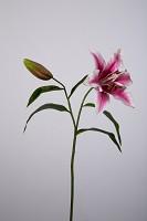 Lily Spray 67cm