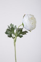 Ranunculus Flocked Stem 35cm