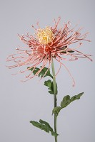 Chrysanthemum Spray 80cm