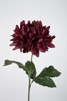 Giant Dahlia Single Stem w/2 set lvs 69