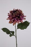 Giant Dahlia Single Stem w/2 set lvs 69c