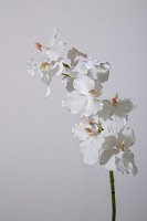 Single Vanda Orchid Stem 84cm