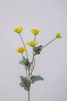 Single Mini Daisy 50cm