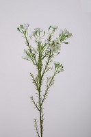 Wax Flower Spray x4 65cm