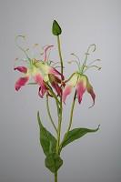 Small Gloriosa 56cm