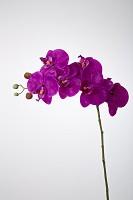 Butterfly Orchid Spray w/6 Flowers