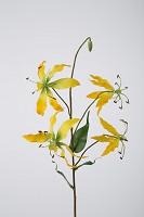 Gloriosa Spray x5 W/4 Leaf W/Coated Flrs