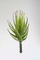 Aloe Small 14cm Green
