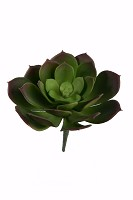 Succulent S 16cm